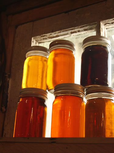 Jars of Maple Syrup on Window Sill